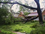 fallen-tree-1