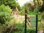 flamingo-oasis