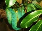 green-snake-2